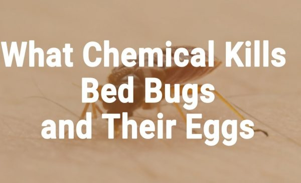 chemicals to kill bed bugs