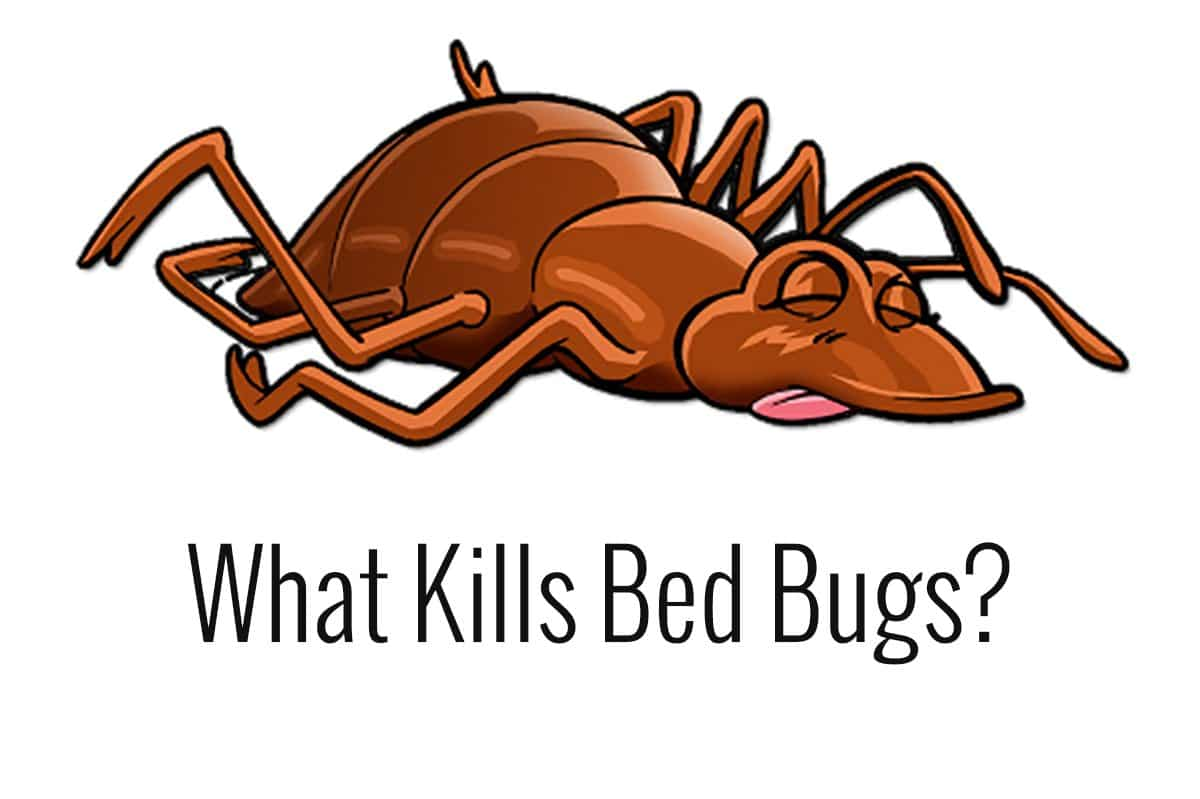 bleach kills bedbugs